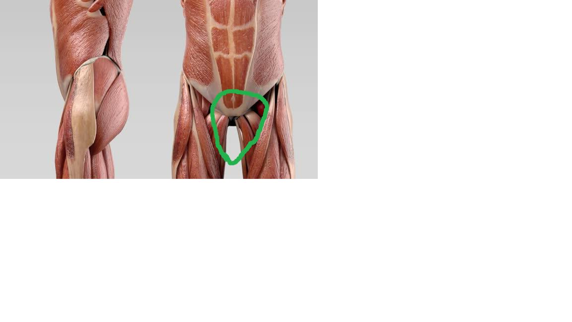 Gemütlich Schlange Muskelanatomie Ideen - Anatomie Von Menschlichen ...