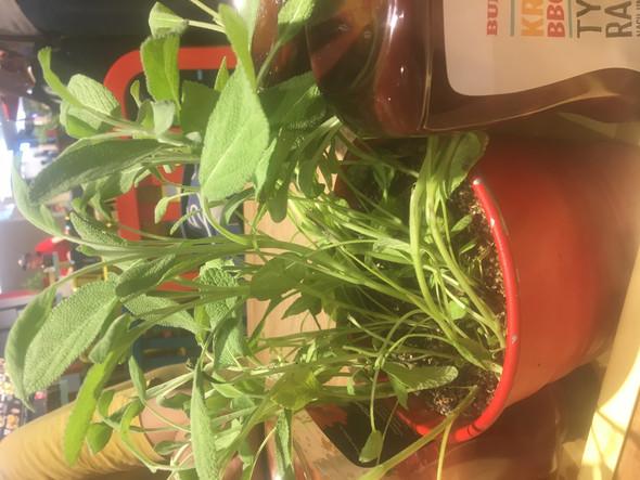 Was für ein Pflanze ist das? Glaub Minze?