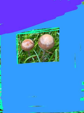 Was für ein Pilz ist das?