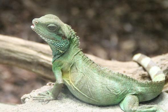 Reptil - (Tiere, Reptilien, Zoo)