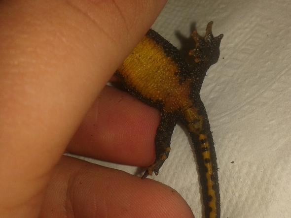 Bild 5 - (Molch, Salamander)