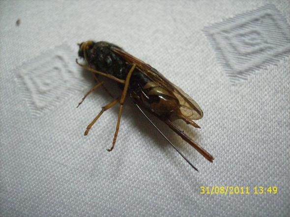 Tier... - (Tiere, Insekten, ungewöhnlich)
