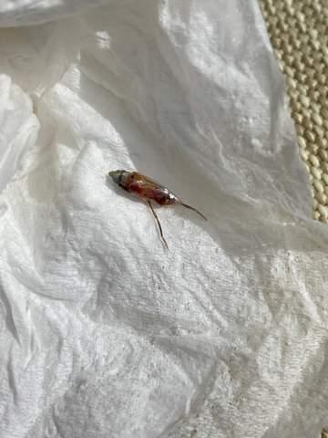 Was für ein Tier ist das?