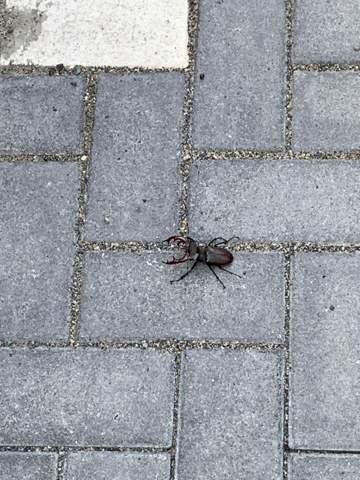 Was für ein Tier ist das (Foto)? Skorpion?