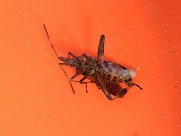 Von unten - (Insekten, Tier auf Balkon)