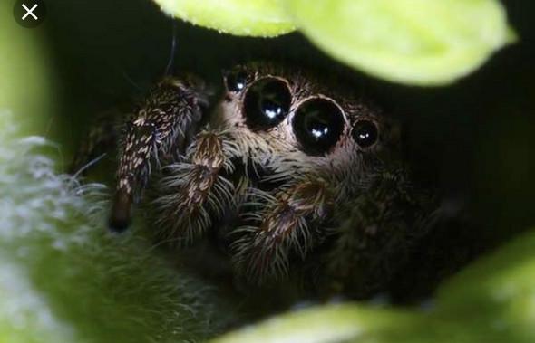 - (Tiere, Spinnen, Terrarium)