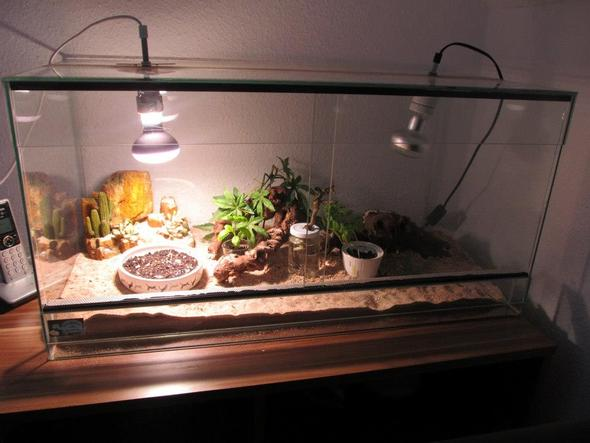 was f r ein tier wehre gut f r mich terrarium tiere haltung. Black Bedroom Furniture Sets. Home Design Ideas