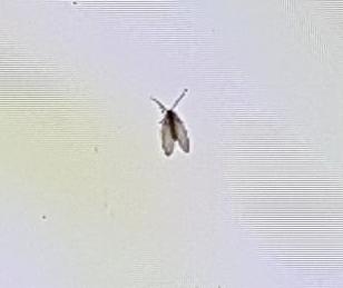 was f r ein tierchen ist das und wie bekomme ich es weg insekten m cken fliege. Black Bedroom Furniture Sets. Home Design Ideas