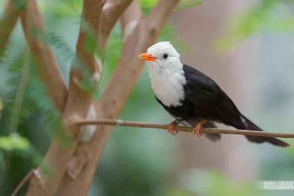 Welcher Vogel? - (Tiere, Vögel)
