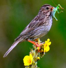 Was für ein Vogel ist das?