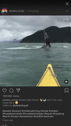 Was für ein Wal könnte das sein?
