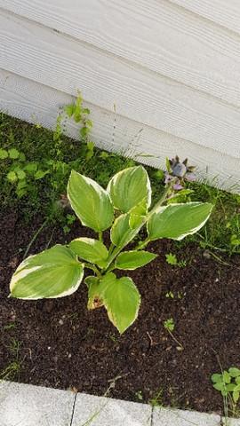Bild1 - (Garten, Pflanzen, Blumen)