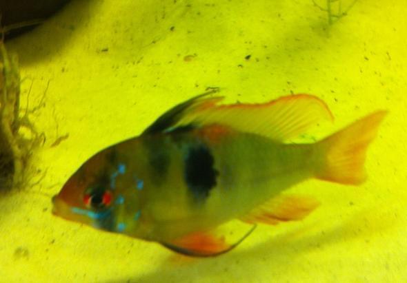 vor ca. 2 Tagen - (Fische, Aquarium, Aquaristik)