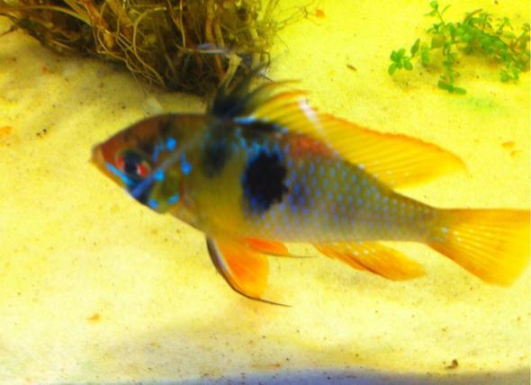 heute - (Fische, Aquarium, Aquaristik)