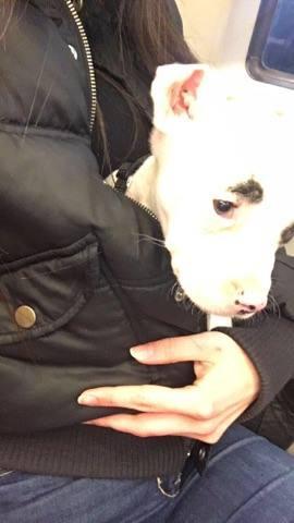 hund - (Hund, Hunderasse, Listenhunde)