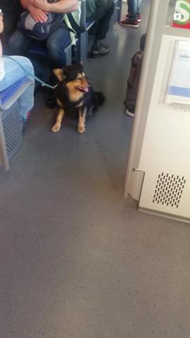 Hundi - (Hund, Haustiere)