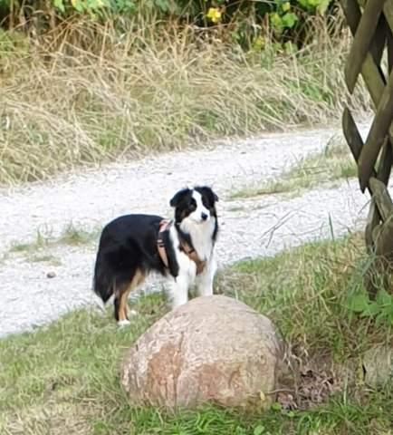 Was für eine Hunderasse ist das?