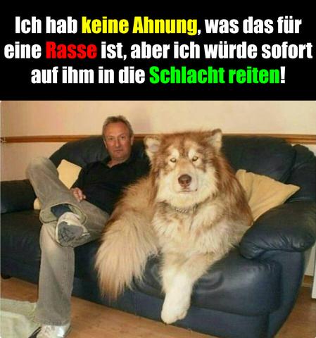 Hund - (Tiere, Hund, groß)