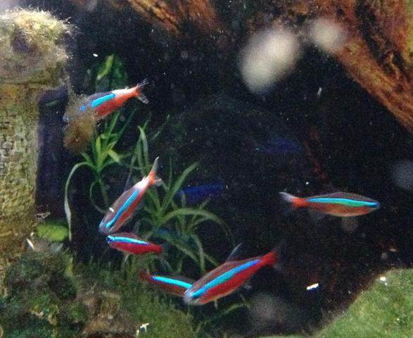 Was für eine Krankheit könnten meine Fische haben?