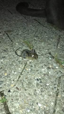 Was für eine Maus ist das?
