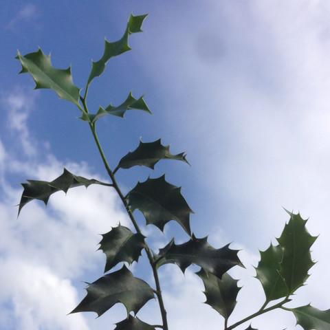 2 Bild  - (Pflanzen, Natur, bluete)