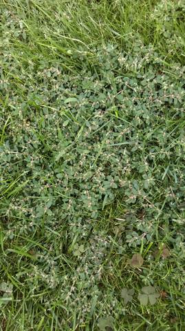 Bild 2 - (Pflanzen, Rasen)