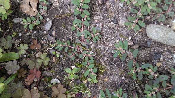 Bild 3 - (Pflanzen, Rasen)