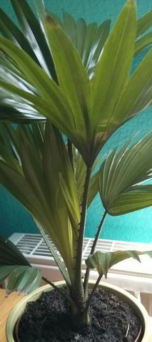 Pflanze - (Pflanzen, Pflanzenart)