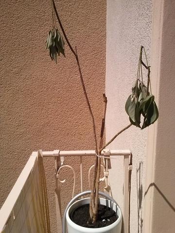 Bild 1 - (Pflanzen, Blumen)