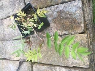 Was für eine Pflanze ist das?