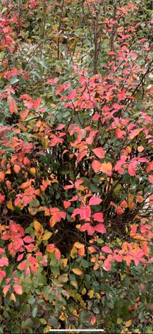 Was für eine Pflanze ist das auf dem Bild?