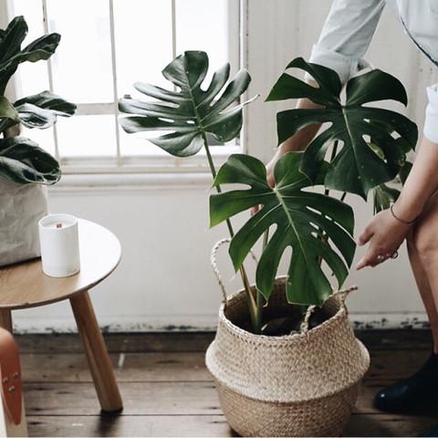 was f r eine pflanze ist das ein philodendron pflanzen botanik. Black Bedroom Furniture Sets. Home Design Ideas