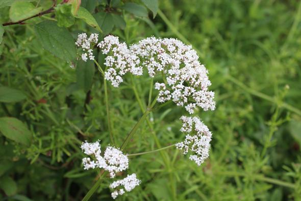 Pflanze 1 - (Biologie, Garten, Pflanzen)