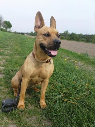 my dog - (Hund, Hunderasse)