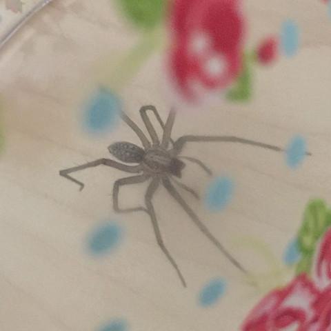 Was f r eine spinne im zimmer spinnen spinnenart - Spinne im zimmer was tun ...