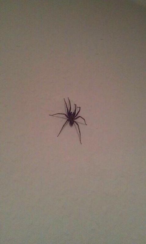 Was f r eine spinne is das tiere bio spinnen - Was tun gegen spinnen im zimmer ...