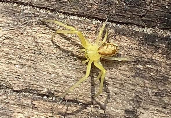 Was für eine Spinne ist das auf meinem Foto?