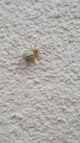 Spinne - (Keller, Spinne)