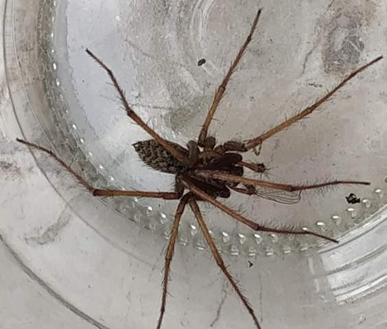 Was für eine Spinnenart ist das?
