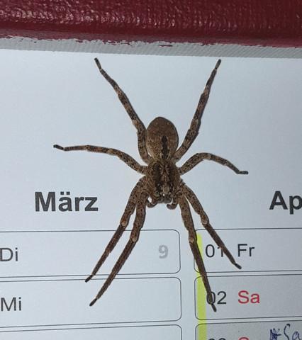 Was für eine Spinnenart ist das bitte?