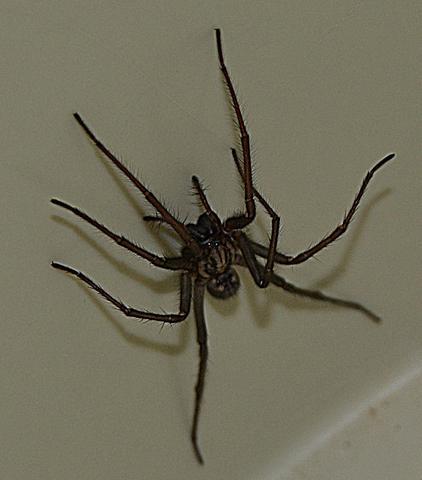 Spinne2 - (Tiere, Insekten, Spinnen)