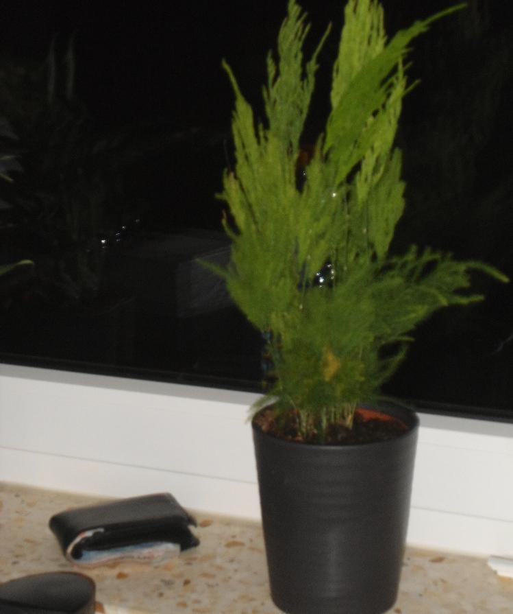 was f r eine zimmerpflanze habe ich mir gekauft pflanzen. Black Bedroom Furniture Sets. Home Design Ideas