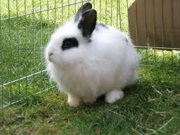 Weiß mit schwarzem Auge - (Tiere, Haustiere, Kaninchen)