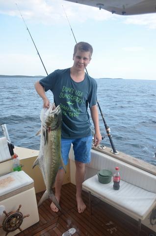 Welcher Fisch - (Fische, Kroatien, Mittelmeer)