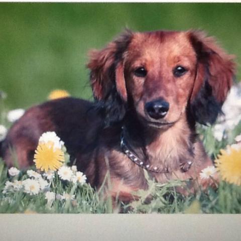 Kleiner Hund mit dem man spielen kann und nicht zu lange Haare  - (Hund, Hunderassen, Kleiner HUnd)