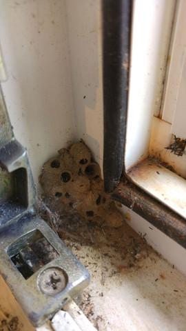 Foto vom Nest - (Insekten, Insektennest)