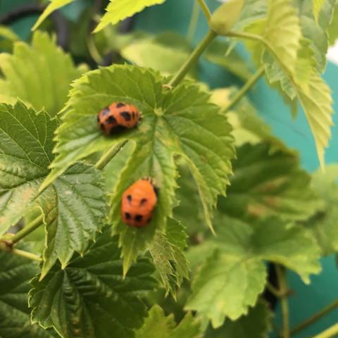 Bild 1 - (Pflanzen, Insekten)