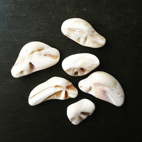 Was habe ich da am Strand gefunden, Fossilien oder Muscheln?