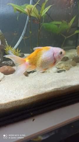 Was haben meine Goldfische?