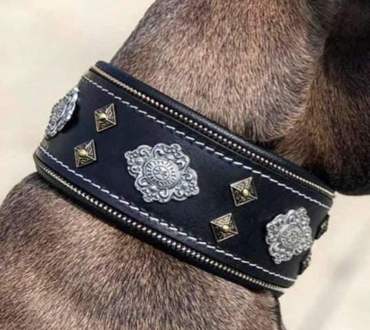 Was haltet ihr von diesem Hundehalsband?
